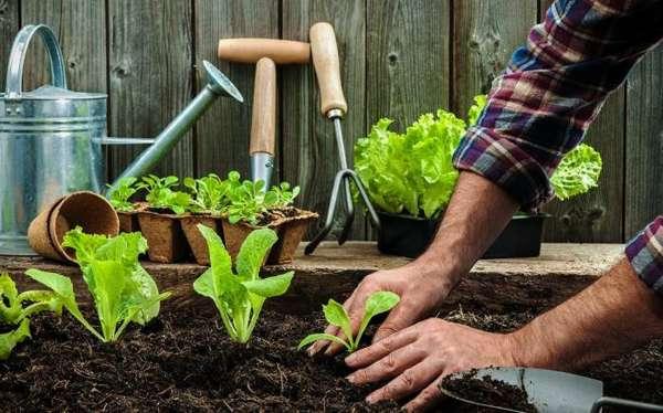 ایده های باغبانی در منزل و آپارتمان