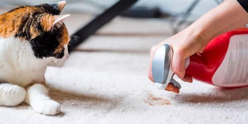 ازبین بردن لکه فرش با آسان ترین روش ها