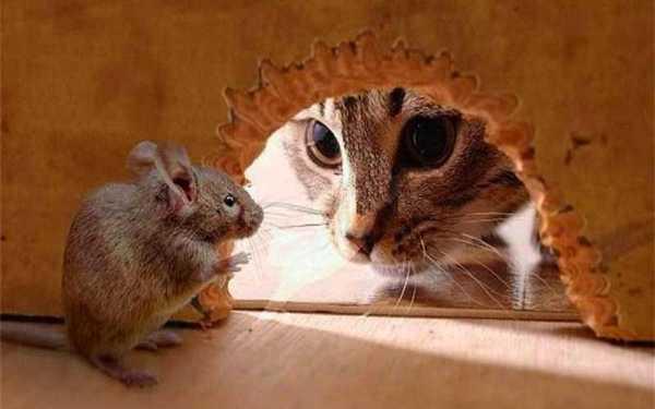 روش هایساده برای از بین بردن موش در خانه