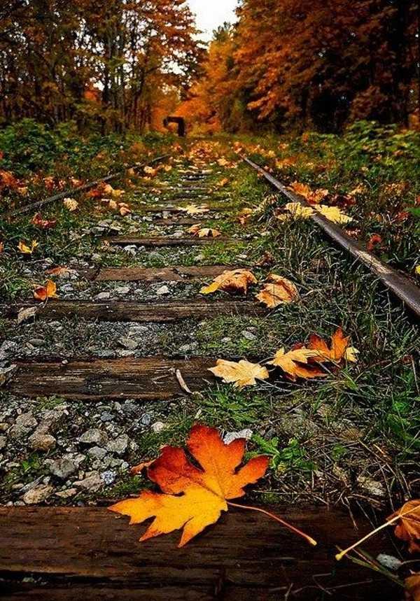 عکس پروفایل پاییزی بدون متن، تصاویر پاییز